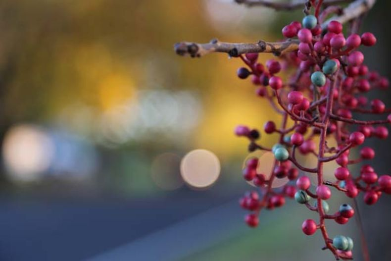 lights help add color and texture to a berry trees background