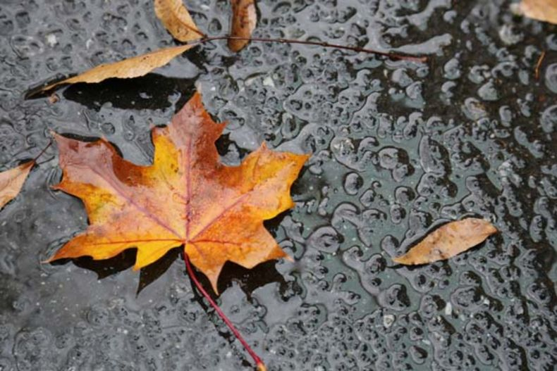 Close up shot of a rain-spackled leaf on the ground