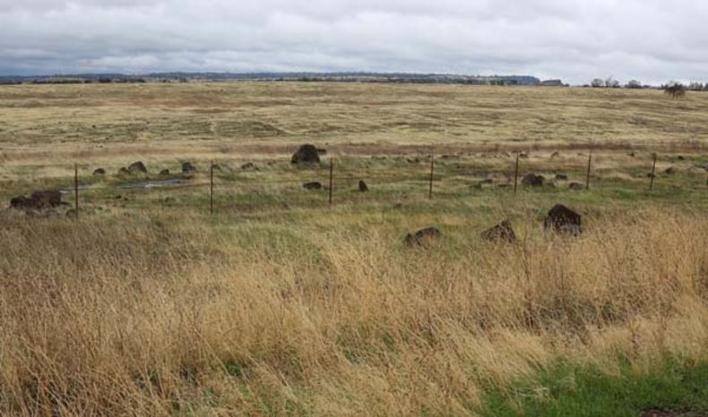 wide shot of a vast grassy plain