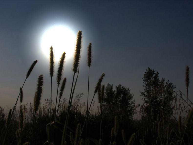 Full moon shot through grassy plants