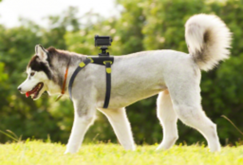 shot of a Sony action cam mounted to a dog