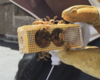 How to Get Great Video Without Great Gear - Honey bees on New York City rooftops
