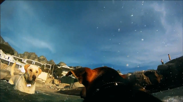 POV of a dog from a Scene of two dogs eye-to-eye taken from a GoPro camera