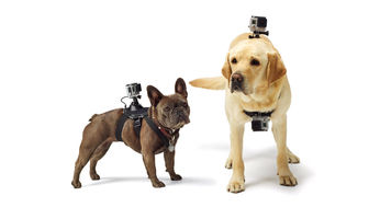 GoPro's fun and cute Fetch harness accessory for GoPro action cameras
