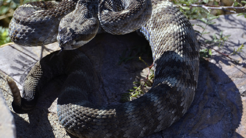 Some interruptions are unpredictable — like poisonous snakes slithering onto your set during production. Proper planning will help you get back on track after such unavoidable delays.