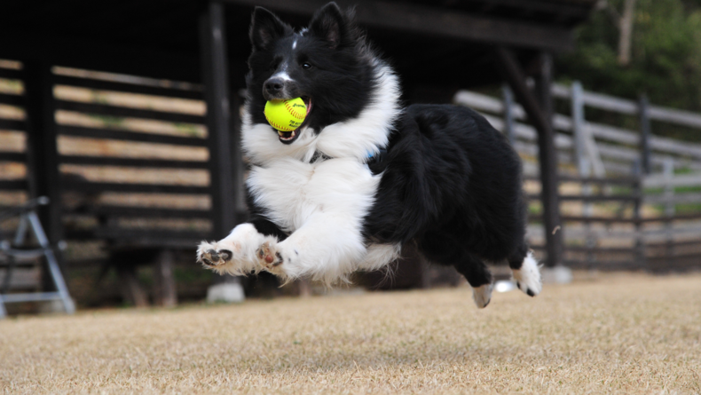 120 fps: Things that move slightly faster — people and pets running, slower sports.