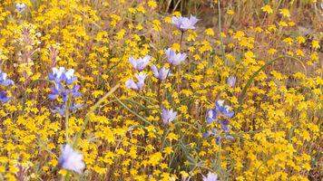 flowers still frame from GH3